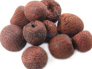 Areca Nuts 02