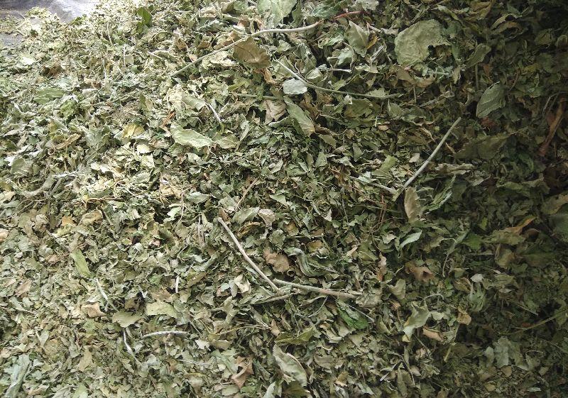 Leptadenia Reticulata Dry Stem and Leaves