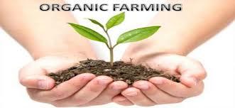 Organic Farming Consultant