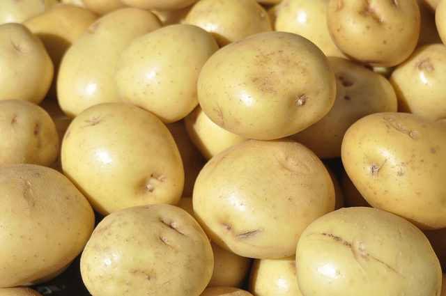 Fresh Potato 02