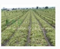 Herbal Farming 04