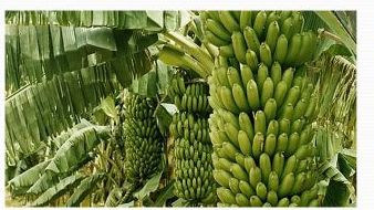 Organic Fruit Farming 02
