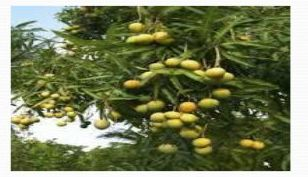 Organic Fruit Farming 03