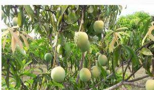 Organic Fruit Farming
