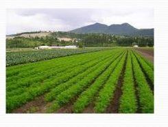 Organic Vegetable Farming