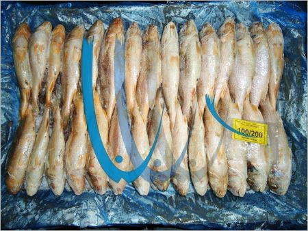 Frozen Croaker Fish 02