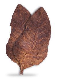 Black Chopadia Tobacco