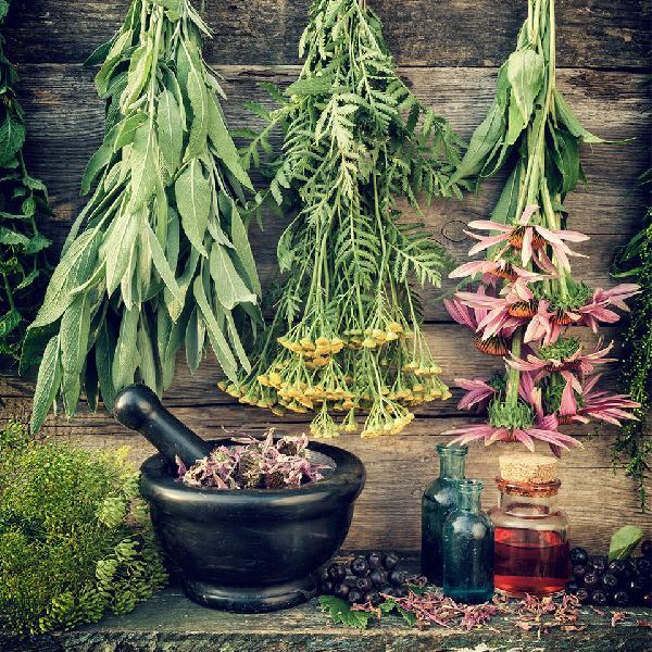 Liquorice Plant Extracts