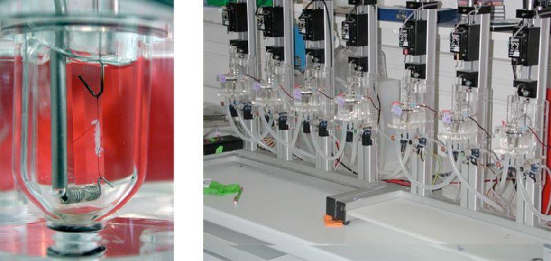 Laboratory Organ Bath System