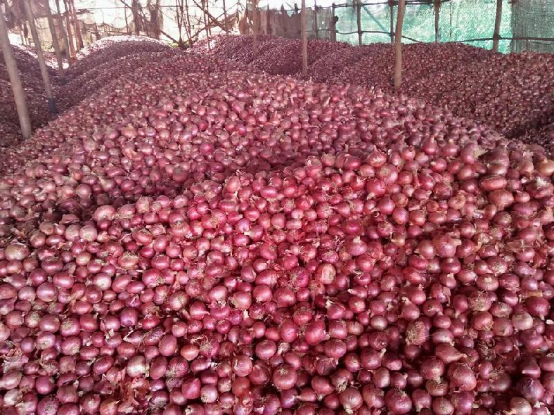 Fresh Onion 03