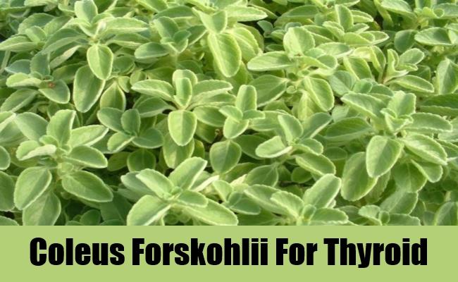 Coleus Forskohlii 01