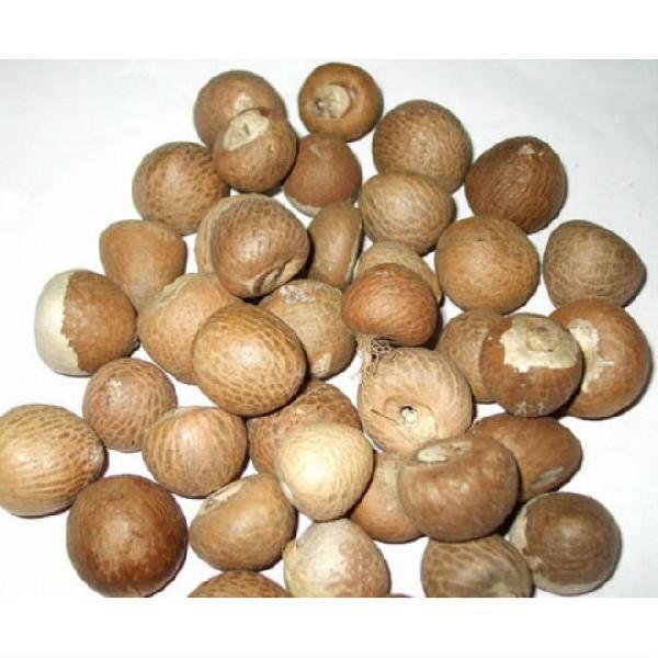 Betel Nut 02