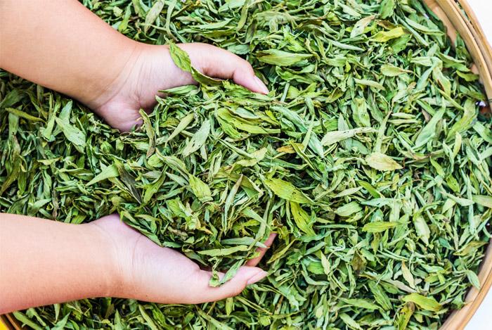 Dried Stevia Leaves 01