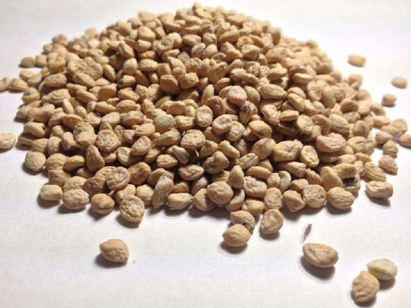Sarpagandha Seeds