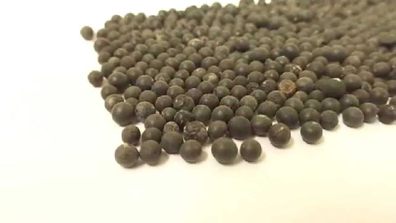 Yellow Shatavari Seeds