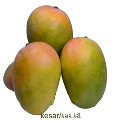 Kutch Kesar Mangoes