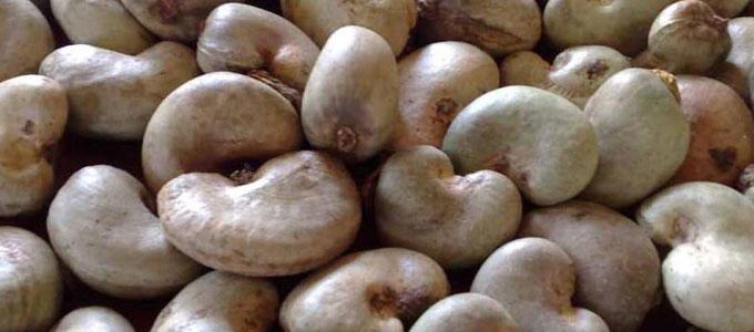 Raw Cashew Nuts 01