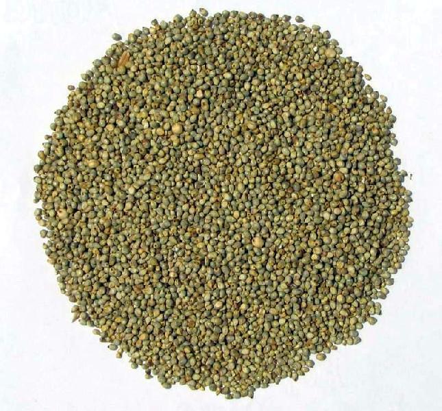 Pearl Millet Seeds 01