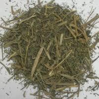 Phyllanthus Niruri (Bhumi Amla)