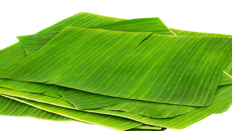 Dry Banaba Leaves 01