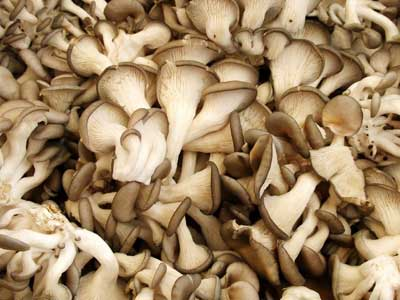 Dried Oyster Mushrooms 01