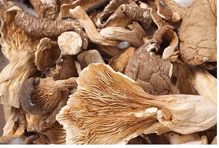 Dried Oyster Mushrooms 02