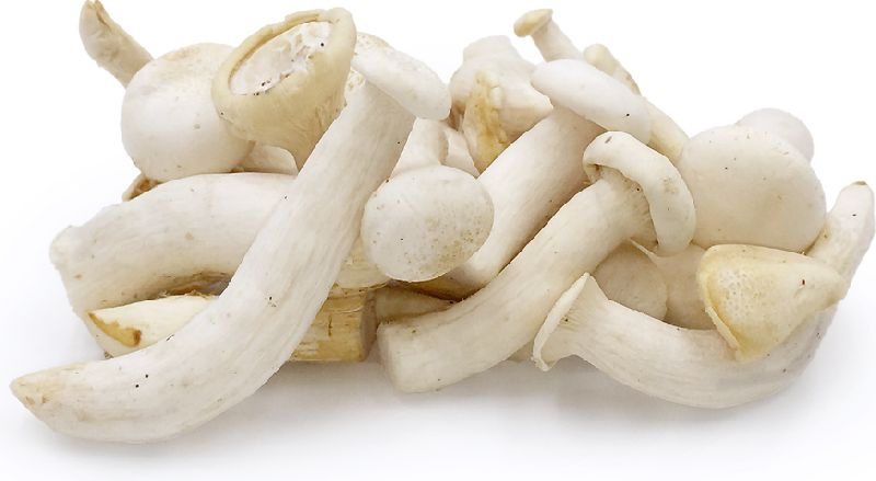 Fresh Milky Mushrooms 02