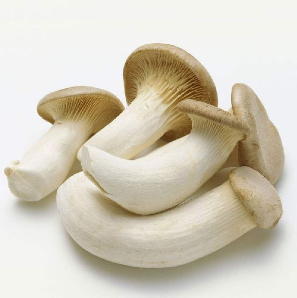 Fresh Oyster Mushrooms 02