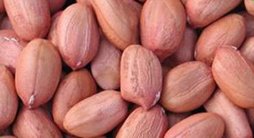 Bold Peanut Kernels 01