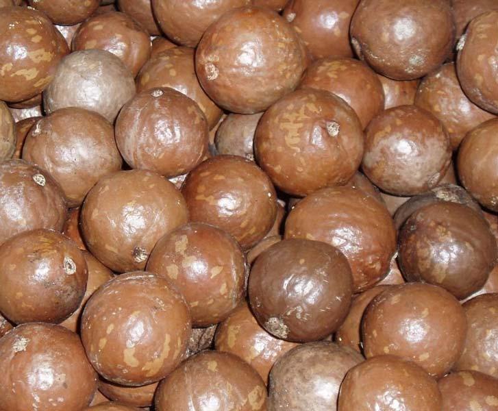 Mongongo Nuts