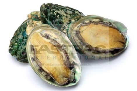 Frozen Abalone