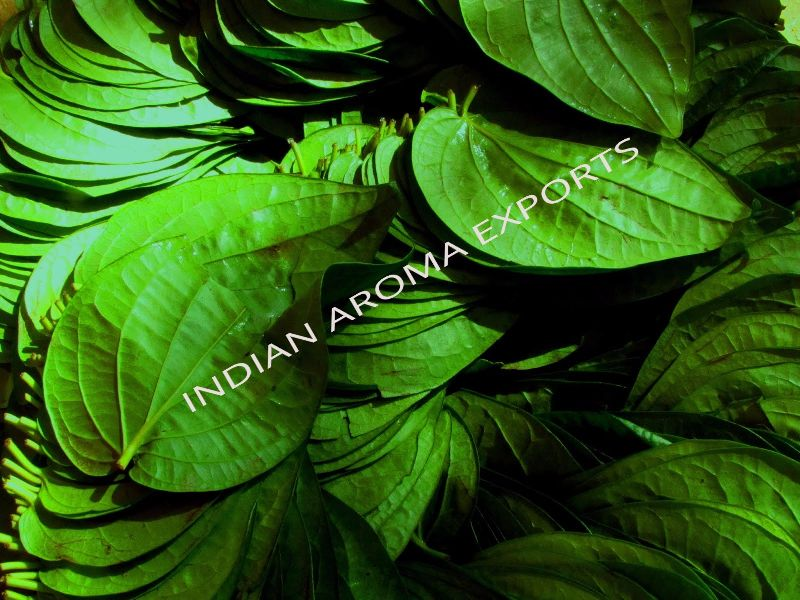 Natural Betel Leaf Essential Oil