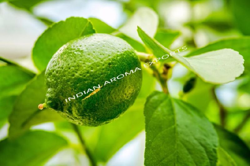 Natural Lime Essential Oil