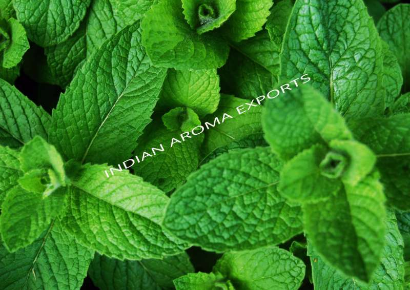 Natural Menthol Essential Oil