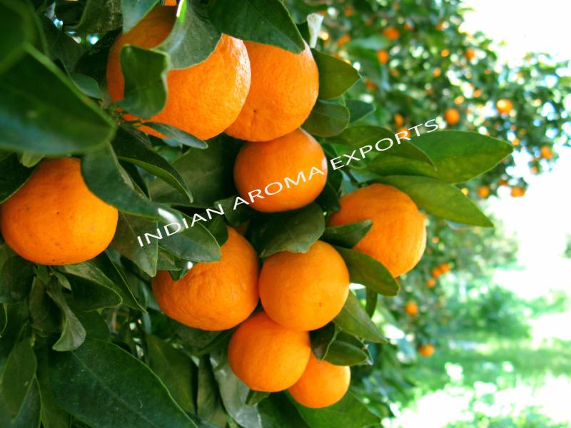 Natural Orange Essential Oil