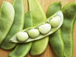 Fresh Lima Beans 02