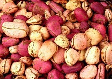 Red Kola Nuts