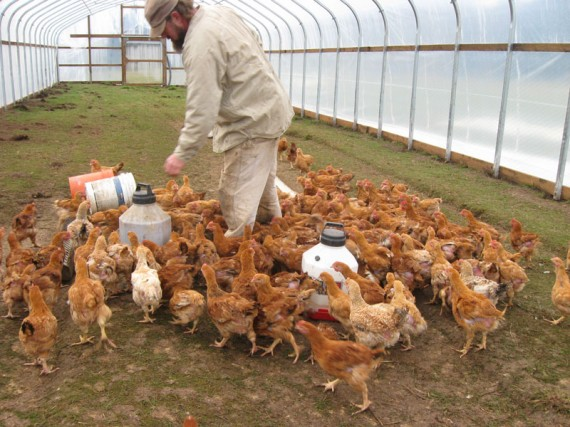 Organic Poultry Farming Service 02