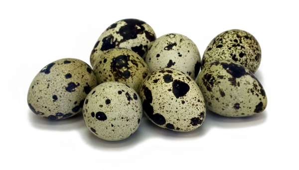 Quail Egg 03