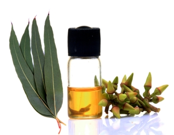 Eucalyptus Oil For Sale