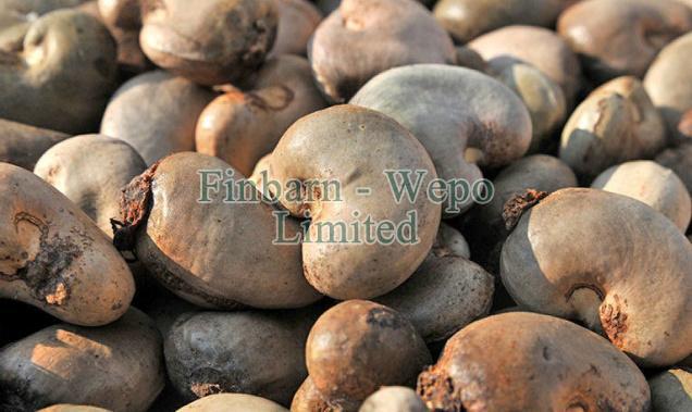 Raw Cashew Nut 02