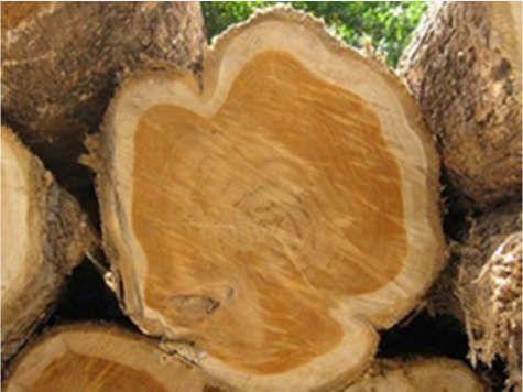 Teak Wood 02