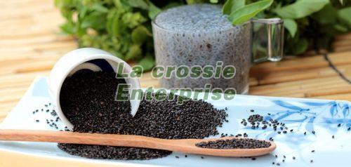 Basil Bio Organic Seeds 03