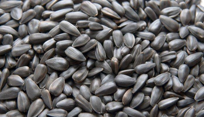 Blue Poppy Seed