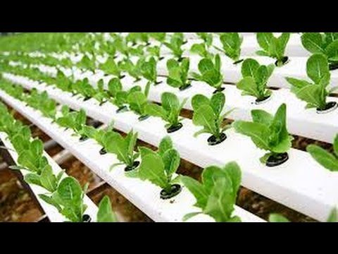 Hydroponic Gardening Training