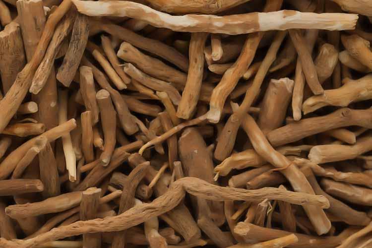 Organic Raw Ashwagandha Roots