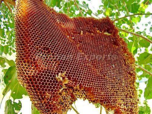 Natural Wild Honey