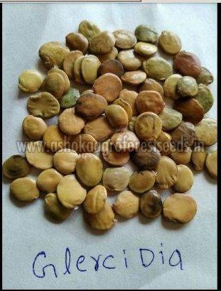 Gliricidia Seeds