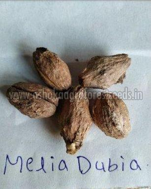 Melia Dubia Seeds