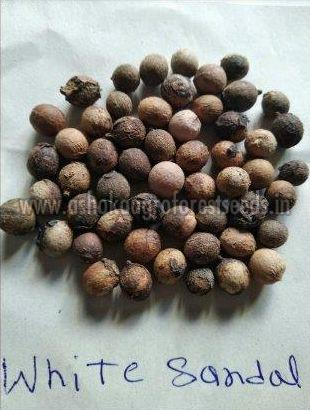 White Sandalwood Seeds